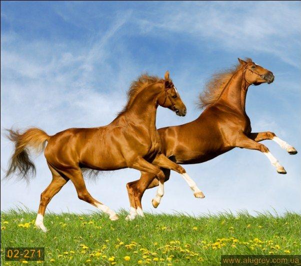 Для обои живые животные андроид красивые